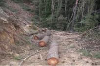 Vés a: Es presenta públicament el projecte d'Òscar Farrerons i Adrià Corella sobre les fonts del Montseny