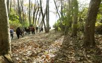 Vés a: UP denuncia falta de democràcia al Centre de la Propietat Forestal