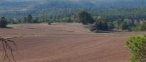 Vés a: Salvem lo Montsià troba insuficient la llei de protecció de les oliveres i alerta que no preserva el paisatge