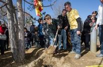 El Pi de les Tres Branques de Folgueroles vetlla una urna plena de desitjos