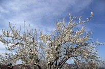 Diumenge i dilluns primaverals