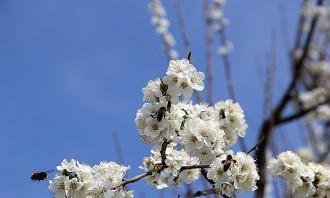 Per què durant la primavera la sang s'altera?
