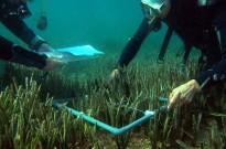 Vés a: Un informe alerta del deteriorament del medi marí a la costa catalana