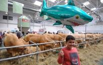 Vés a: El Mercat del Ram de Vic aposta pel vacum, formatges i productes de pagès
