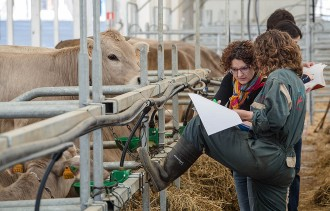 Agricultura posa en marxa l'estratègia per prevenir la llengua blava