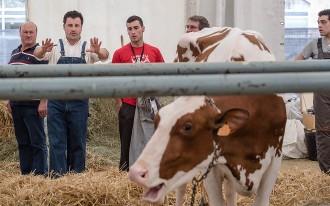 Vés a: El Mercat del Ram de Vic aposta novament pel bestiar i els formatges