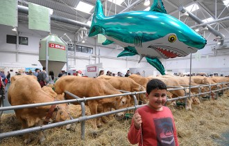 El Mercat del Ram de Vic programa 140 activitats al voltant de la ramaderia