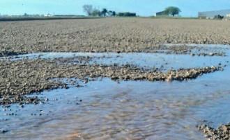 Vés a: La inundació del delta reactiva l'alerta pel caragol poma