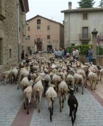 Vés a: «El Camí ramader de marina. De la Cerdanya al Penedès», una proposta turística i econòmica