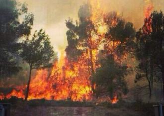 Vés a: L'esforç en prevenció fa minvar els incendis forestals a Catalunya