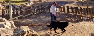 Vés a: Barcelona sumarà 22.500 metres quadrats d'espais per a gossos