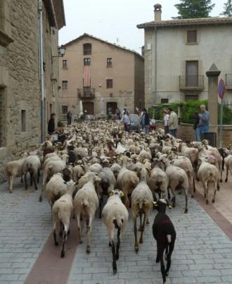 Vés a: Santa Margarida i els Monjos, Llívia i Lluçà recuperen una ruta de transhumància