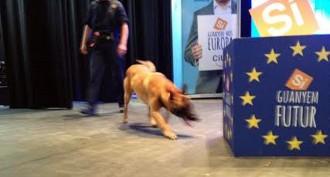 Luck, el gos artificier que vigila el President