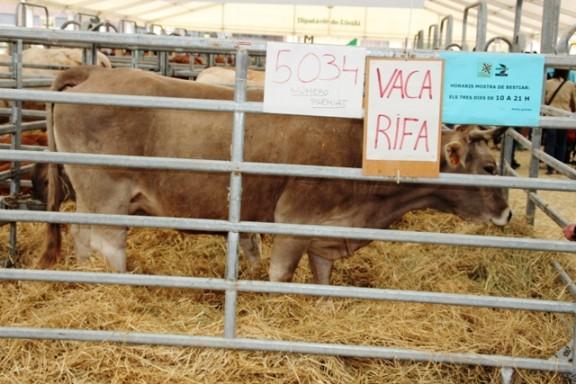 El número guanyador de la vaca de la Fira