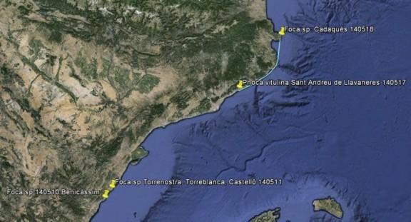 Mapa dels albiraments de foca. Foto: DAR