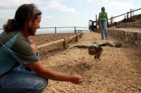Vés a: El nou Zoo del Pirineu a Odèn donarà a conèixer les aus rapinyaires autòctones del país