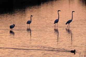 El delta de l'Ebre, a punt per rebre el I Festival Internacional d'Ornitologia