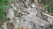 Vés a: Nou abocament d'aigües residuals al Francolí