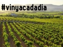 Vés a: L'ACE i #vinyacadadia premia a...