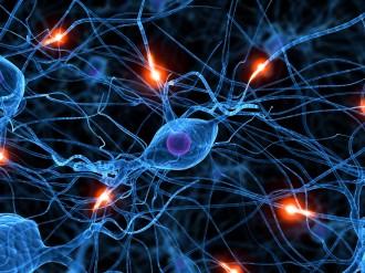 6 coses que fas i maten les teves neurones