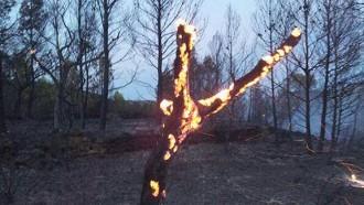 Vés a: Un estiu amb menys incendis però més hectàrees cremades