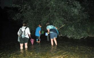 Vés a: Capturen més de 7.200  crancs invasors a la Riera de Merlès, al Berguedà