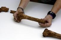 Els arqueòlegs troben restes humanes a les coves de Serinyà