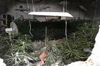 Detenen una parella al barri de la Font de la Pólvora per cultivar marihuana