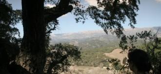 Gegants ben arrelats: arbres singulars i monumentals (III)