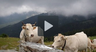 Setcases, poble ramader
