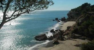 La vida a les platges: la posidònia