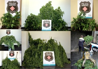 Decomissades 150 plantes de marihuana en 14 pisos de Girona