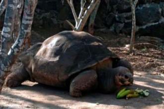 Vés a: Mor la tortuga gegant 'Pepe el misionero'