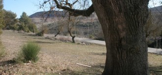 Ombres mortes: les velles rouredes de Sant Magí de la Brufaganya