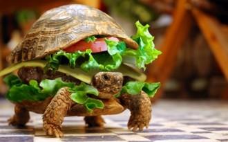 Disfressa una tortuga d'hamburguesa per colar-la a l'avió