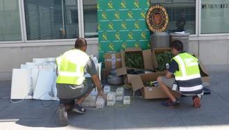 Vés a: Intervenen una plantació de 83 plantes de marihuana a Cambrils