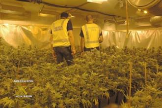Detinguts dos homes per tenir 450 plantes de marihuana a Llagostera