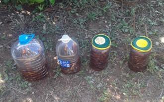 Vés a: Decomissats nou quilos de dàtils de mar a Les Cases d'Alcanar