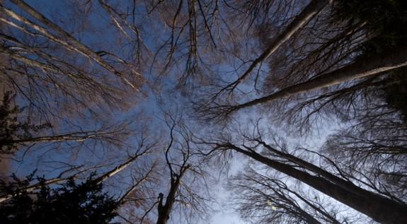 Vés a: Volen que s'aturi la tala de boscos singulars a les comarques gironines