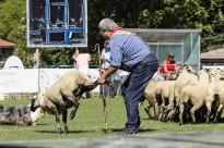 Domini total d'Antonio Alustiza al Concurs de Gossos d'Atura de Ribes de Freser