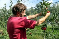 Vés a: Productors de pomes ecològiques de muntanya creen la cooperativa Biolord