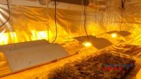 Comissades 1.120 plantes de marihuana en quatre municipis gironins