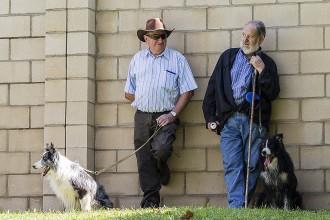 Concurs de Gossos d'Atura de Ribes