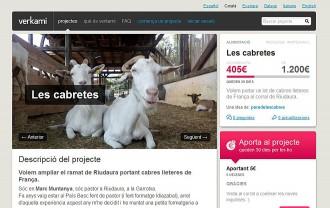 Vés a: Un pastor de la Garrotxa fa un Verkami per comprar cabres per fer formatges