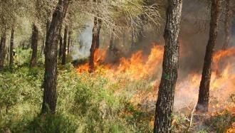 El foc també pot ser una vacuna contra els incendis forestals catastròfics