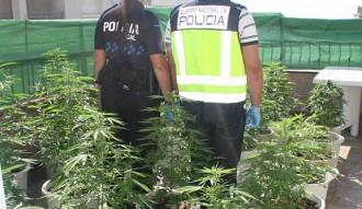La policia desarticula dues plantacions de marihuana gràcies a Twitter
