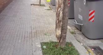 Mal estat dels arbres de Terrassa