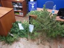 La policia Local d'Arbúcies comissa una quinzena de plantes de marihuana