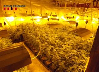 Detinguda una parella de Llinars per cultivar marihuana